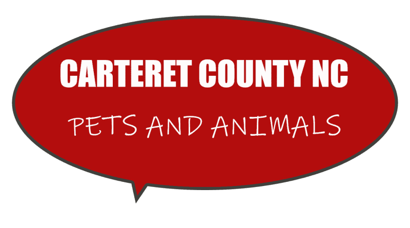 Articles related to Carteret County animals and pets adoption and rescue in NC