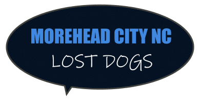 Database of missing dogs lost in Morehead City NC - Public accessible search