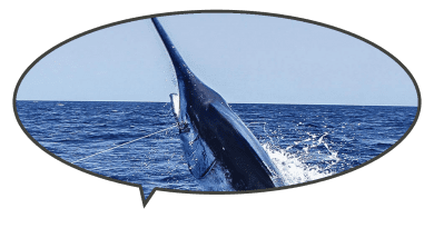 Top Dog wins with 914 lb blue marlin