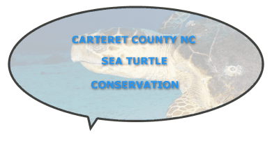 Threatened sea turtle endangered carteret county
