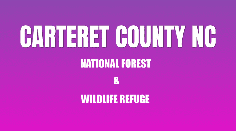 exploring wildlife carteret NC in forest